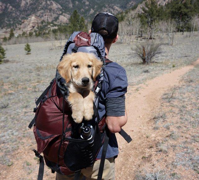 a man carrying his pet
