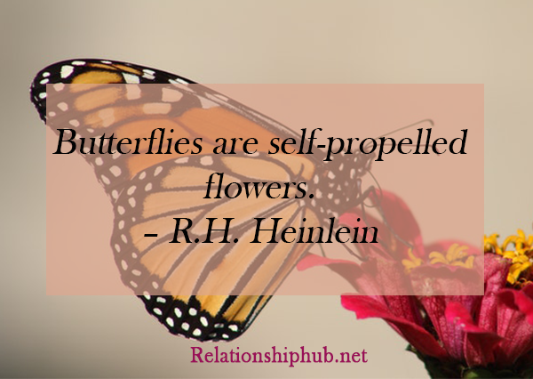 short butterfly quotes